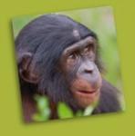 bonobo-accueil[1].jpg